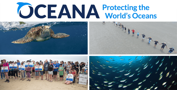 Collage of the Oceana logo, activists protesting on a beach, a sea turtle, and sardines