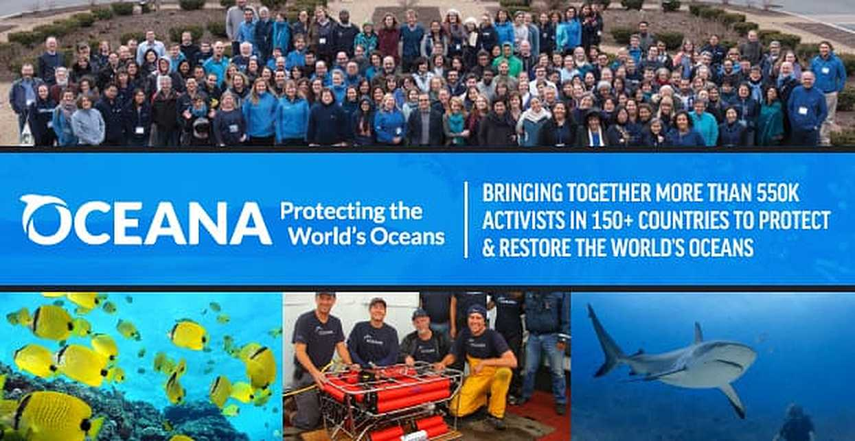 Oceana — Bringing Together More Than 550K Activists in 150+ Countries to Protect & Restore the World's Oceans