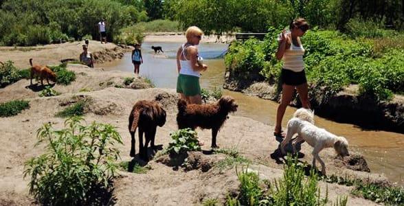 Photo of a dog park in Denver
