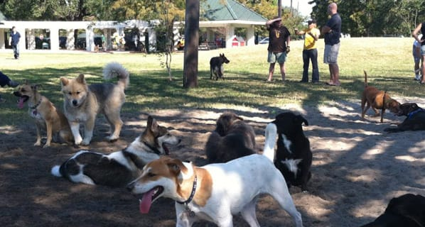 Photo of the NOLA City Bark Park