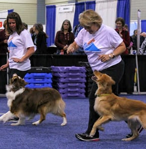 Photo of dog trainers at the 2017 APDT conference