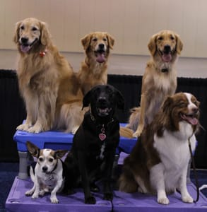 Photo of dogs at the APDT's 2017 conference
