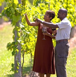 Photo of a couple in a vineyard