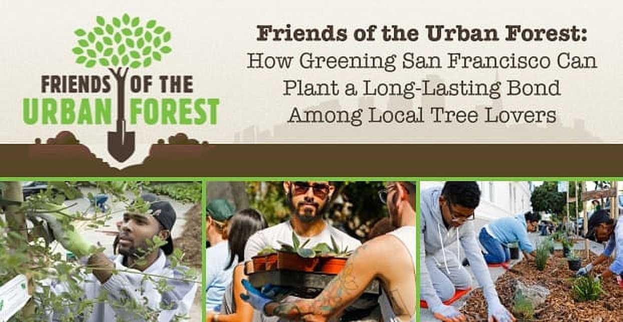 Friends of the Urban Forest: How Greening San Francisco Can Plant a Long-Lasting Bond Among Local Tree Lovers