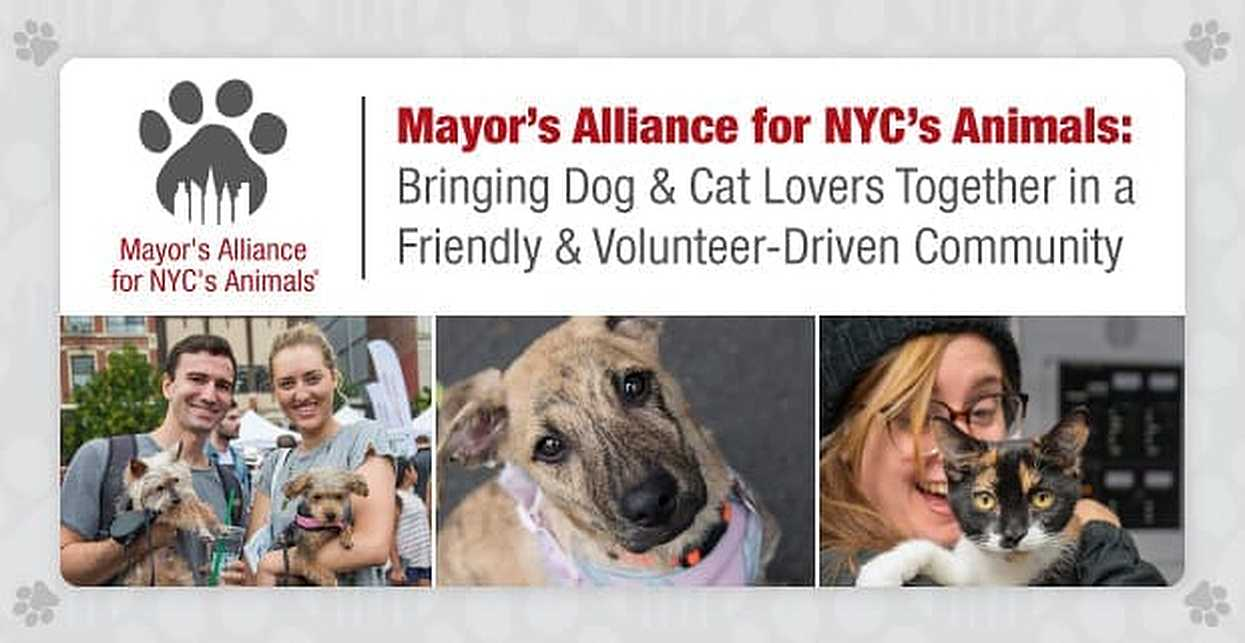 Mayor's Alliance for NYC's Animals: Bringing Dog & Cat Lovers Together in a Friendly & Volunteer-Driven Community