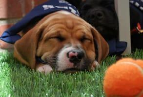 Photo of a sleeping puppy