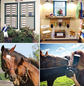 Photo collage of Mill Ridge Farm's horses and facilities