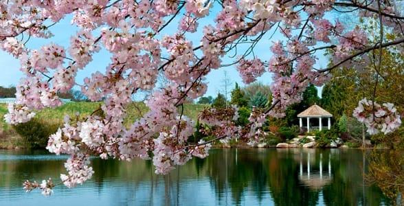 Photo of Lewis Ginter Botanical Gardens