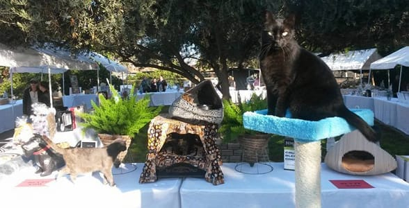 Photo of the Cat House on the Kings' Autumn Open House in 2015
