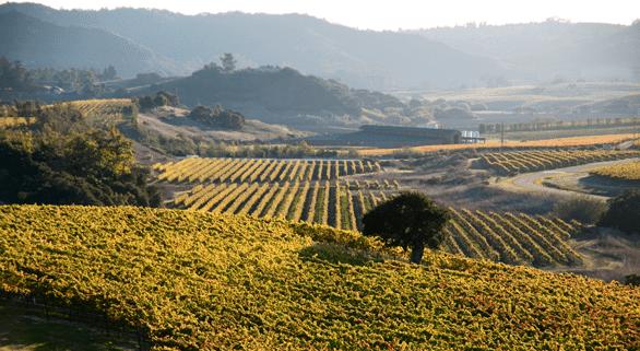 Photo of San Luis Obispo wine country