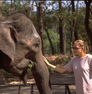 Photo of a Journeys International excursion to pet elephants