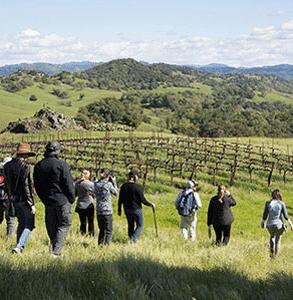 Photo of a vineyard hike at Jordan