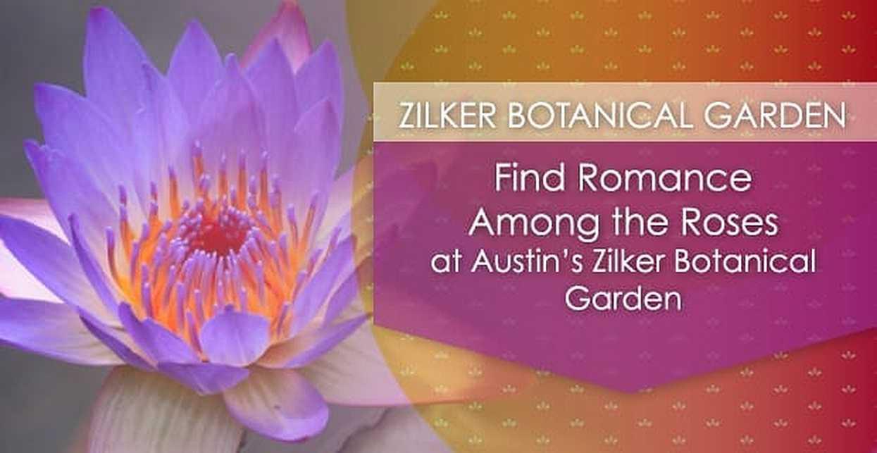 Find Romance Among the Roses at Austin's Zilker Botanical Garden