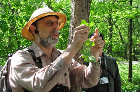 Photo of Wildman Steve Brill comparing plants