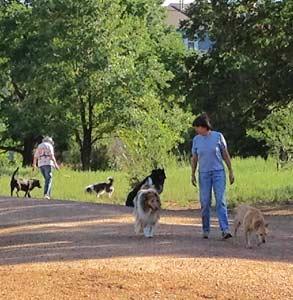 Photo of Bear Creek Dog Park
