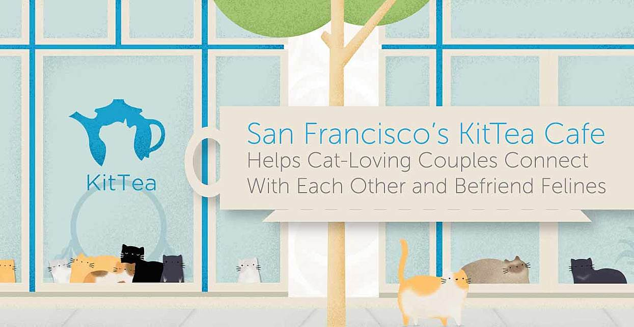 San Francisco's KitTea Cafe Helps Cat-Loving Couples Connect With Each Other and Befriend Felines