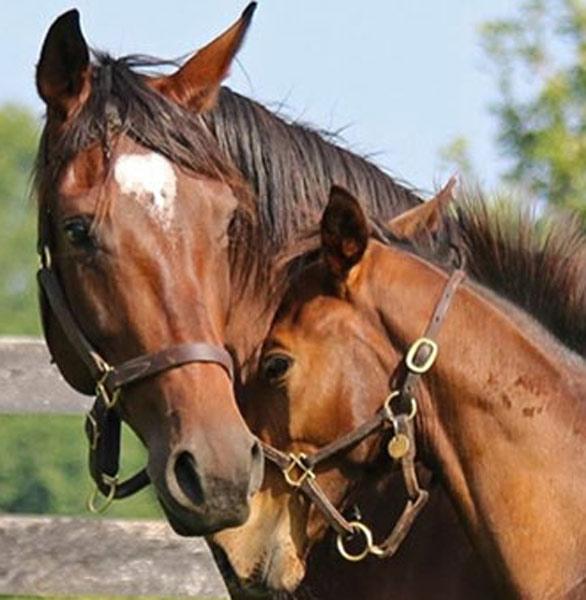 Photo of horses at Mill Ridge Farm