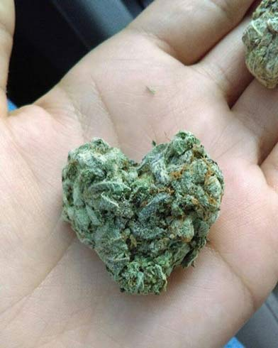 Photo of marijuana shaped like a heart