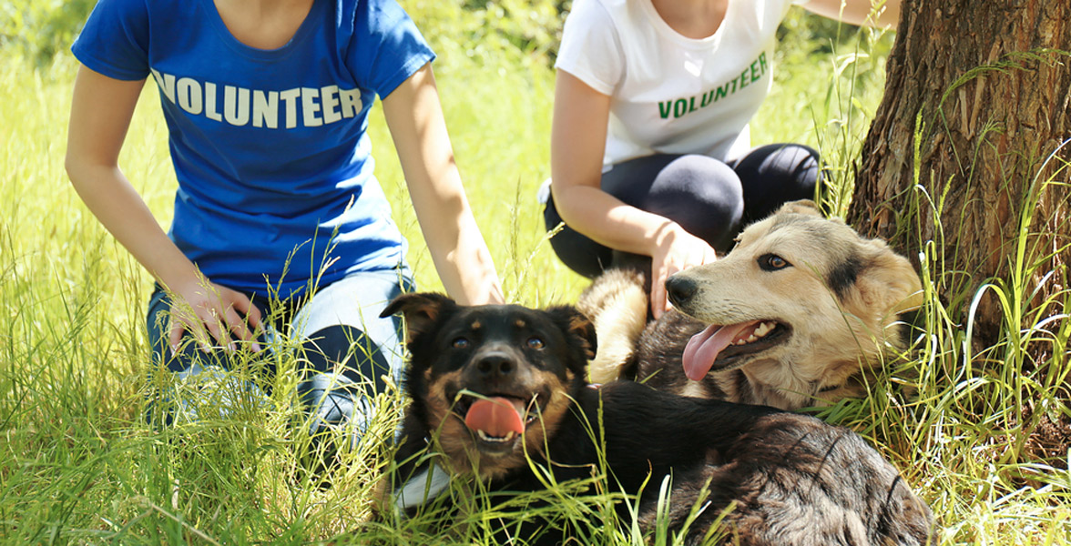 Photo of animal shelter volunteers