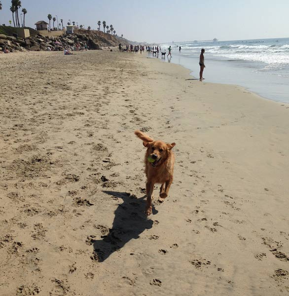 Photo of the Huntington Dog Beach
