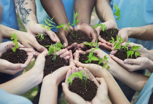 Photo of volunteers with plants in their hands
