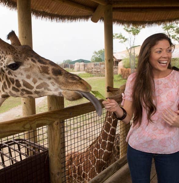 Photo of a girl feeding a giraffe