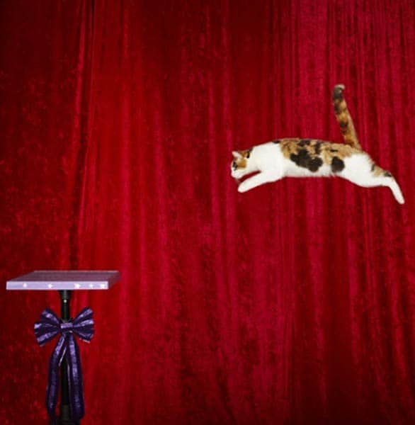 Photo of a cat jumping