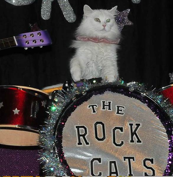 Photo of the Rock Cats band